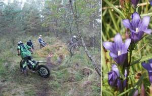 Foto: Emil Nilsson, Bernd Haynold/TT MC sprider blommor